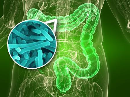 Intestino e microbiota